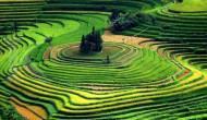 Gara-gara rencana impor beras Indonesia, harga beras di Thailand dan Vietnam melonjak