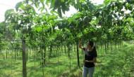 Taiwan menyulap kebun menjadi agrowisata